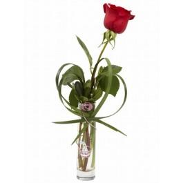 Rose rouge unique