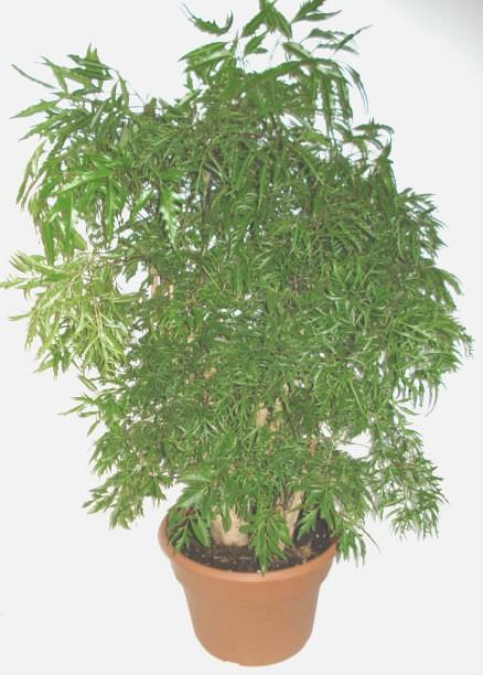 Plantes vertes green plants fleuriste lasalle florist nini for Catalogue plantes vertes