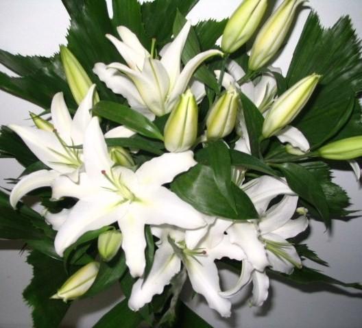 Fleuriste lasalle florist nini fleuriste nini florist lasalle saint valentin valentine - Lys blanc signification ...