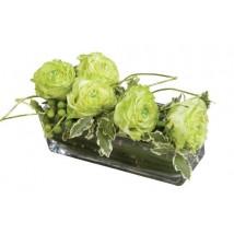 Rose Thé Vert
