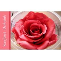 Rose Immortelle Rose Foncé