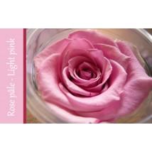 Rose Immortelle Rose Pâle