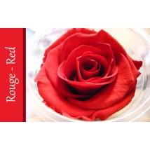 Rose Immortelle Rouge
