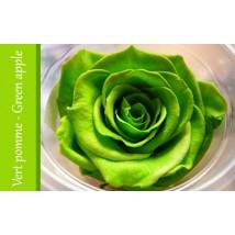 Rose Immortelle Vert Pomme