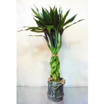 Bambou IV