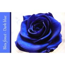 Rose Immortelle Bleu Foncé
