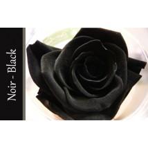 Rose Immortelle Noire