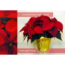 Poinsettias Sentiment de Noël